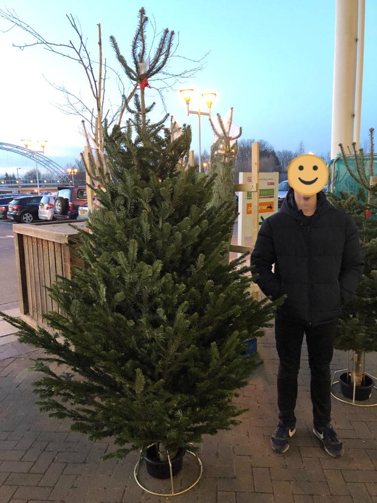 Christmas tree, Son, 365
