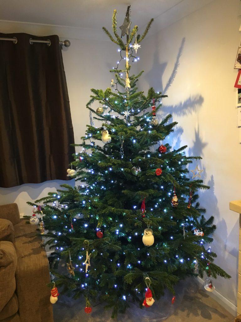 Christmas tree, Christmas, 365