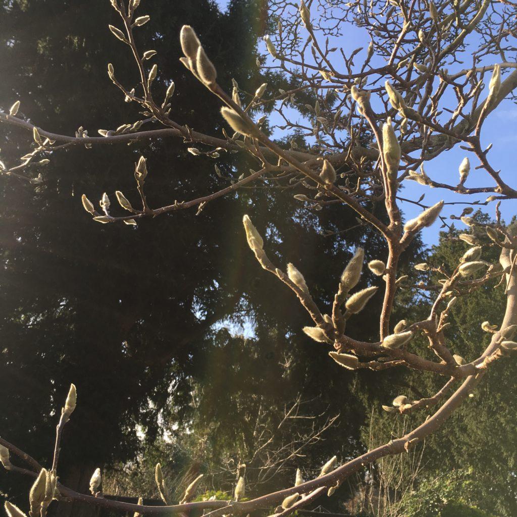 Tree, spring, buds, 365