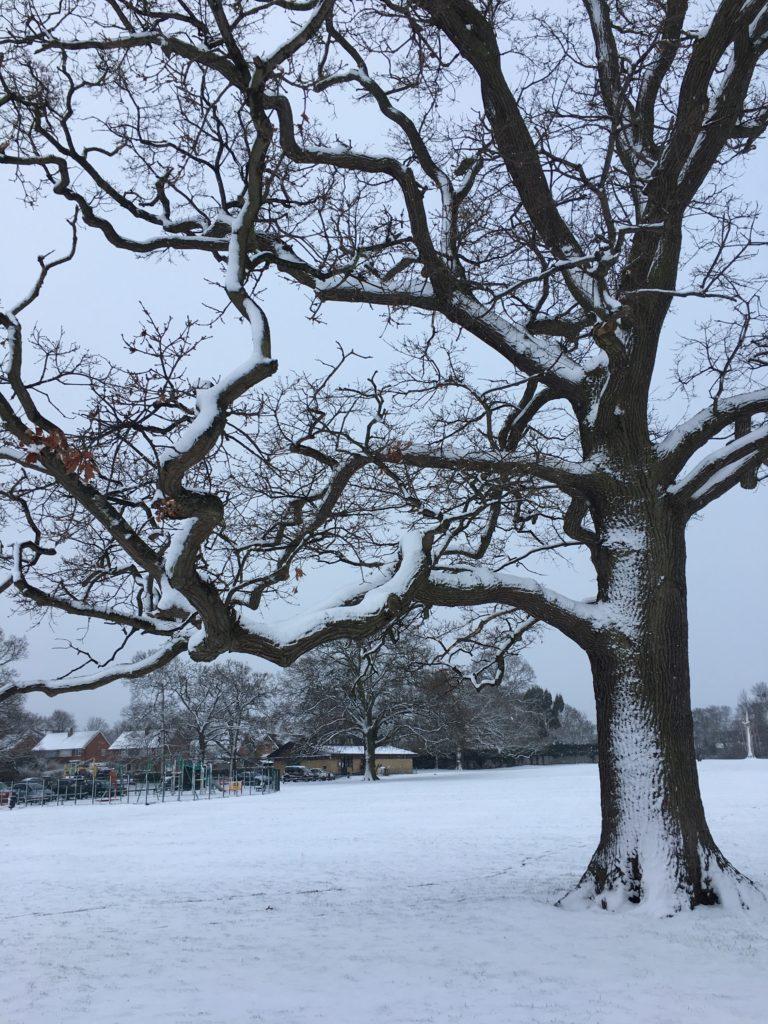 Tree, Snow, 365