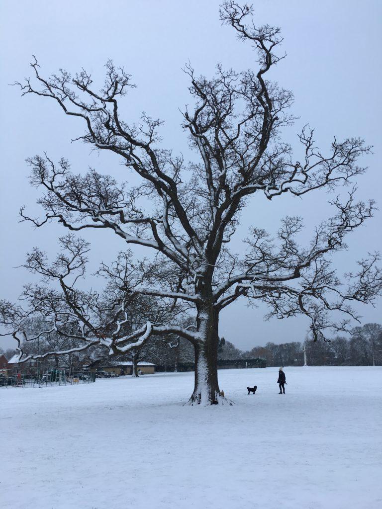 Snow, Silent Sunday, Tree, Sunday Snap