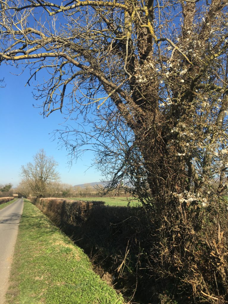 Country walk, Countryside, Weather, Sun, 365