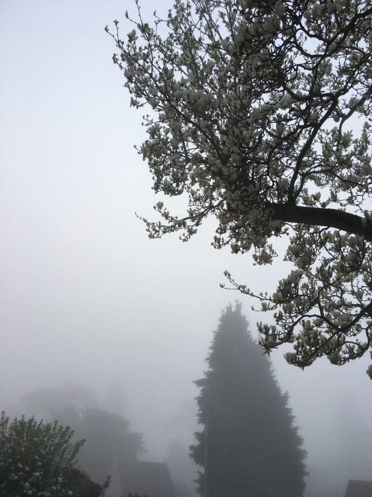 Mist, Sky, 365