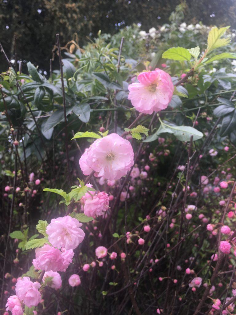 Blossom, Spring, Flowers, 365