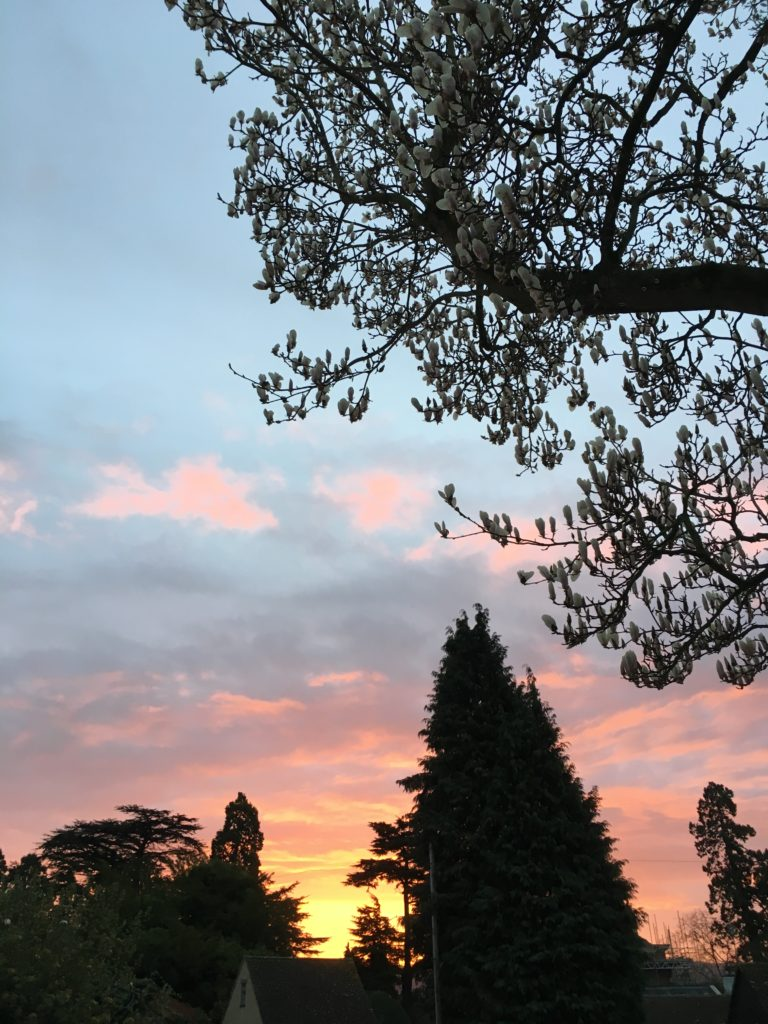 Sunrise, Sky, 365, Silhouettes