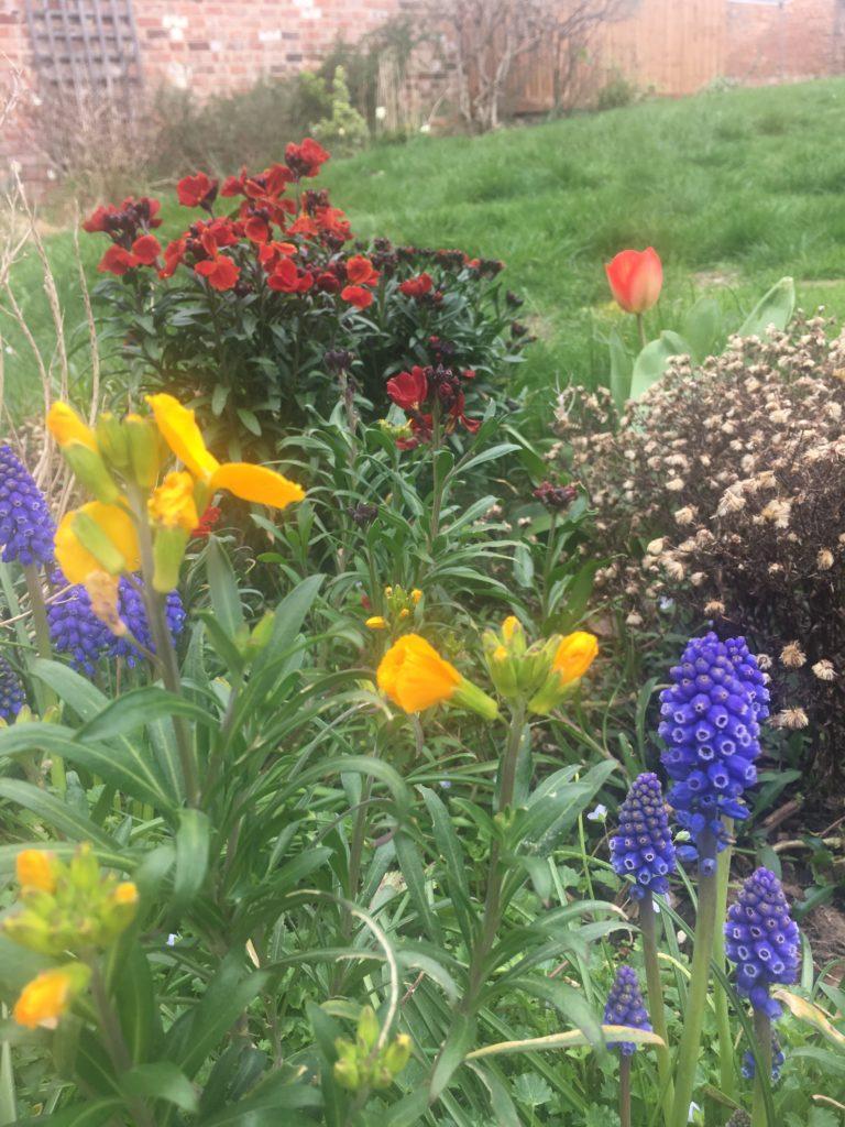 Garden, Spring, Flowers, 365
