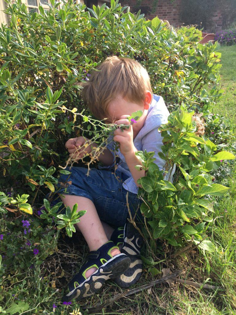 Nephew, Garden, 365