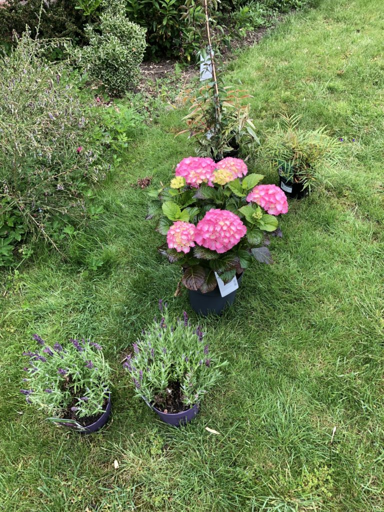 Plants, New plants, Garden