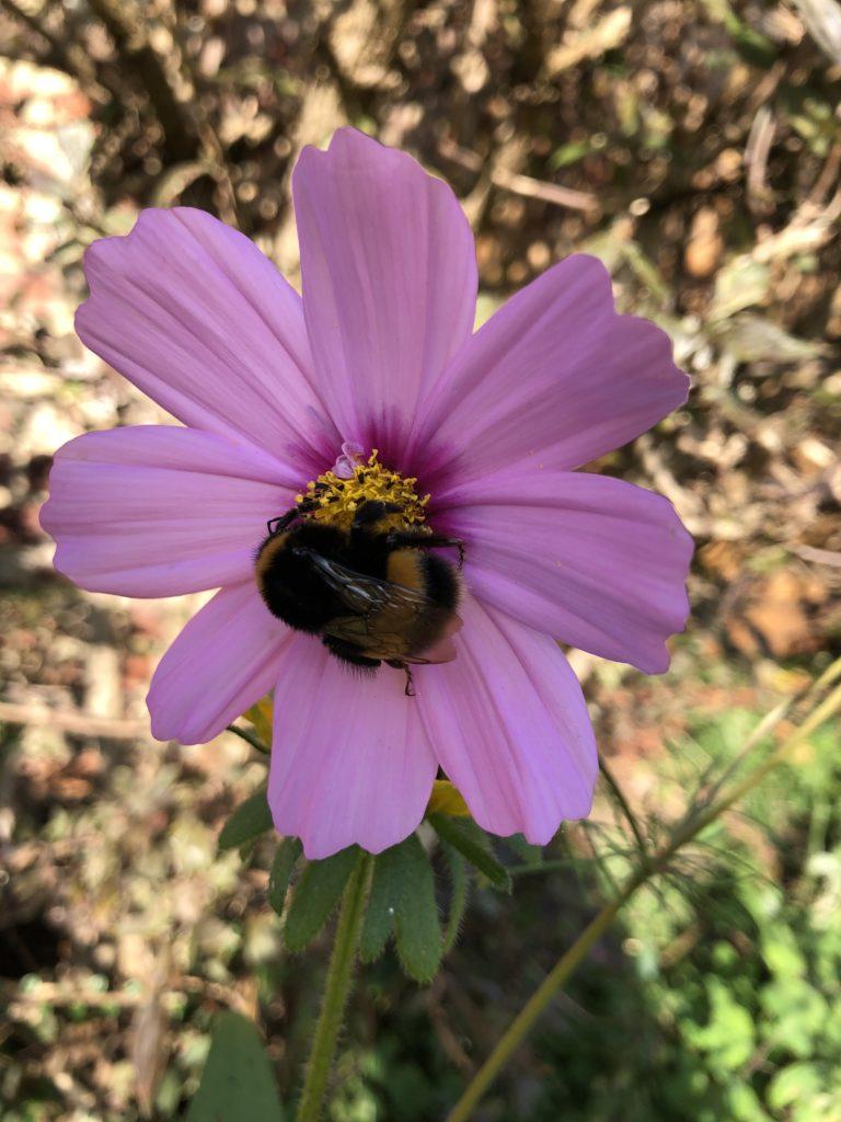 Flower, Bee, Garden, 365
