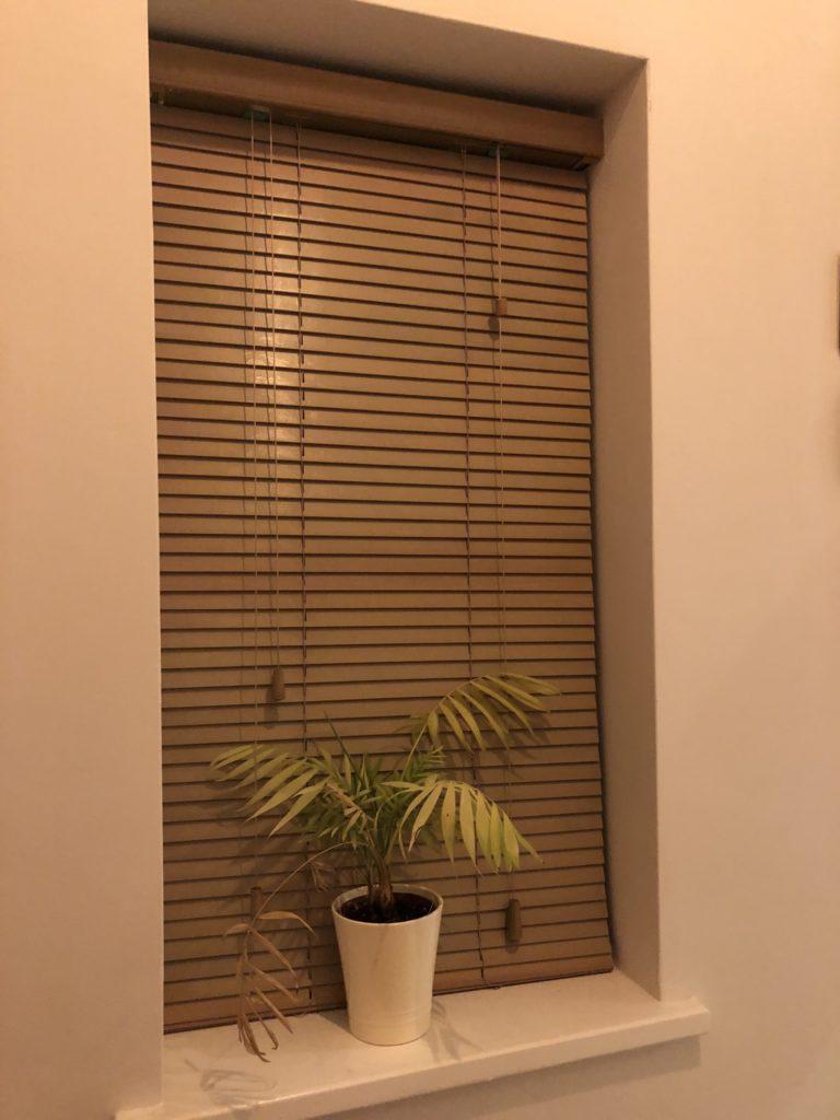 Window, Plant, Instagram, 365