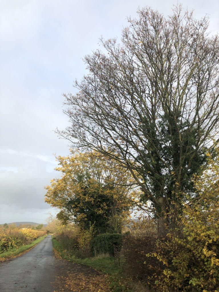 Trees, Autumn, 365