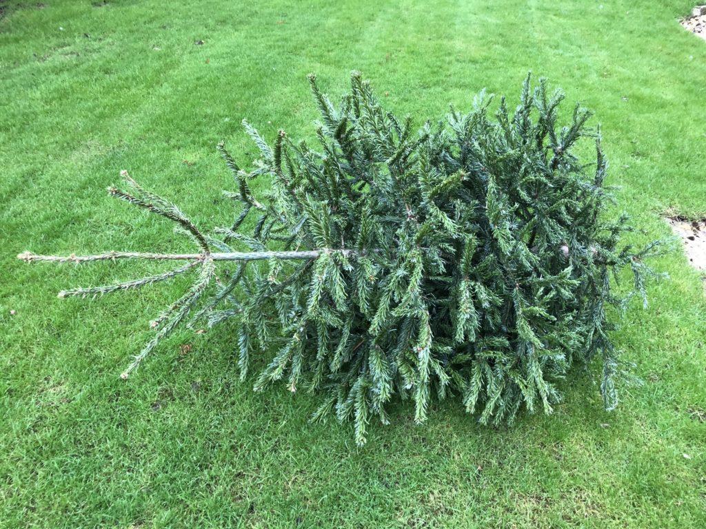 Christmas tree, Christmas is over, 365