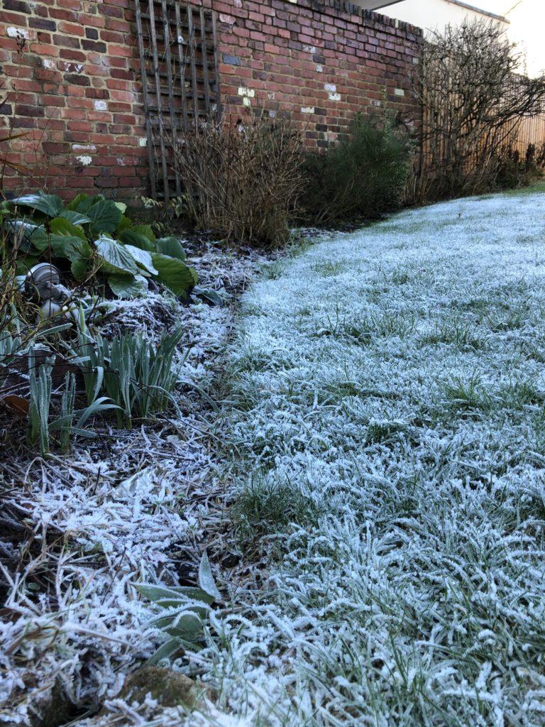 Garden, Frost, Winter, 365