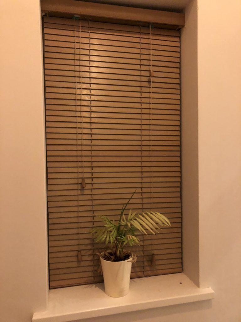Window, Plant, Instagram stories, 365