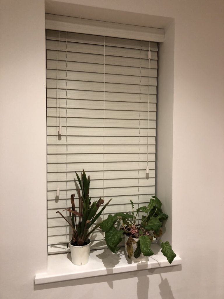 Window, Plants, Blinds, Instagram stories, 365
