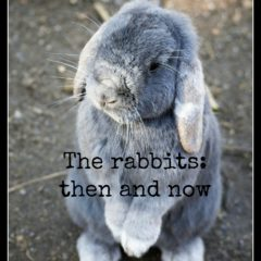 The rabbits: then and now