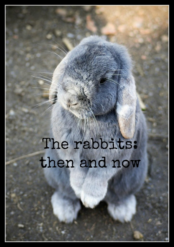 Rabbit, Bunny, The rabbits; then and now