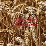 The wheat intolerance