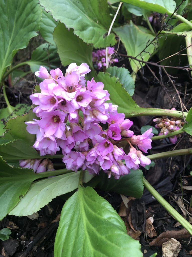 Flower, Pink flower, Garden, 366