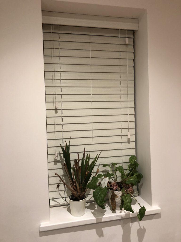 Window, Instagram stories, Blind, Plants, 366