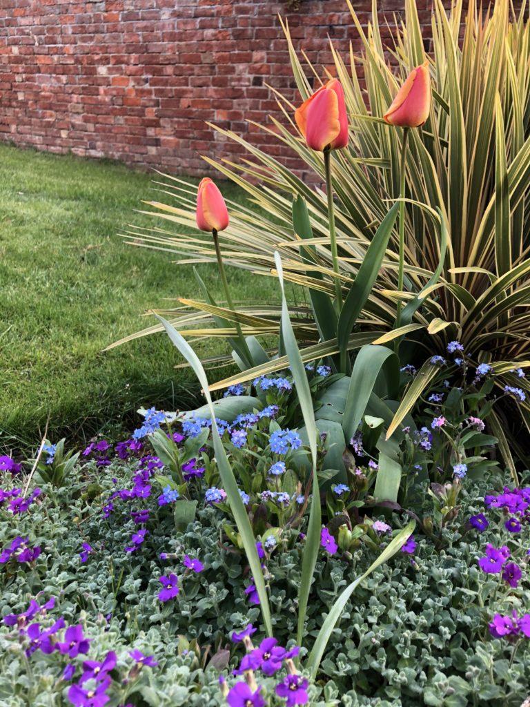 Garden, Flowers, Spring, Silent Sunday, My Sunday Snapshot, Tulips