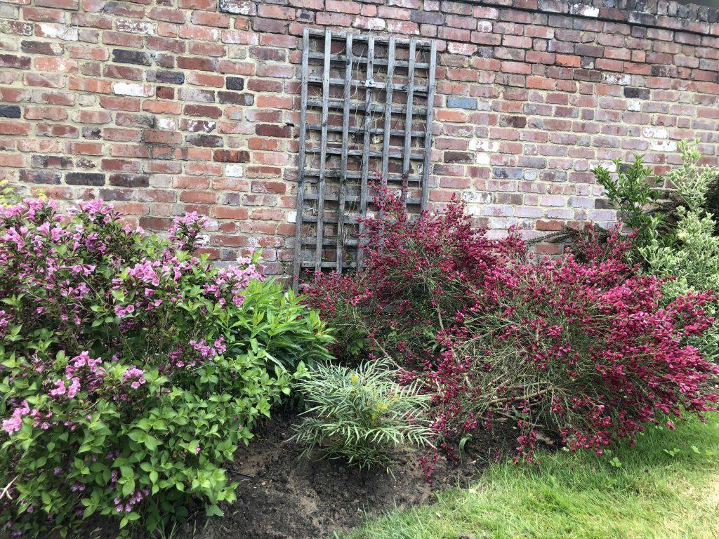 Garden, Plants, Flowers, Blossom, 365