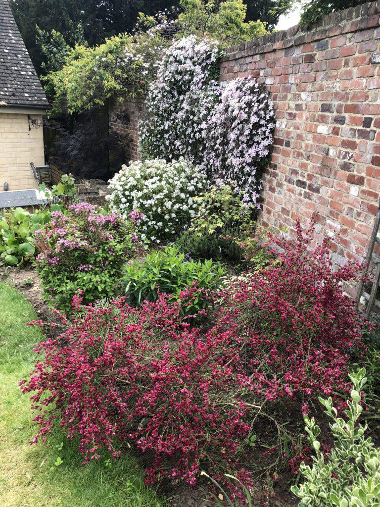 Garden, Flowers, Blossom, Silent Sunday, My Sunday Snapshot