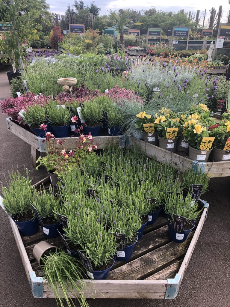 Garden centre, Plants, lockdown, 366