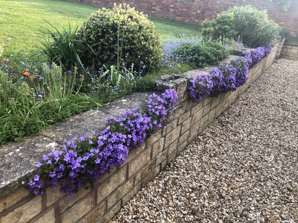 Flowers, Garden, Spring, 366