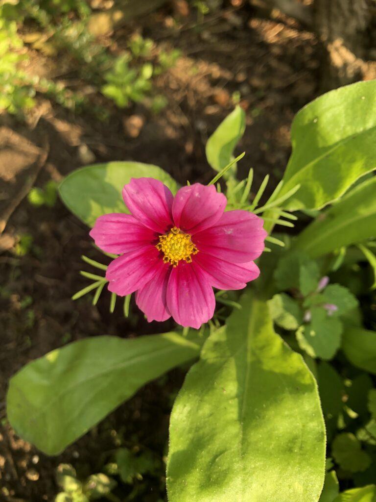 flower, garden, 366