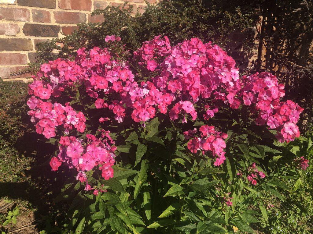 flowers, garden, 366