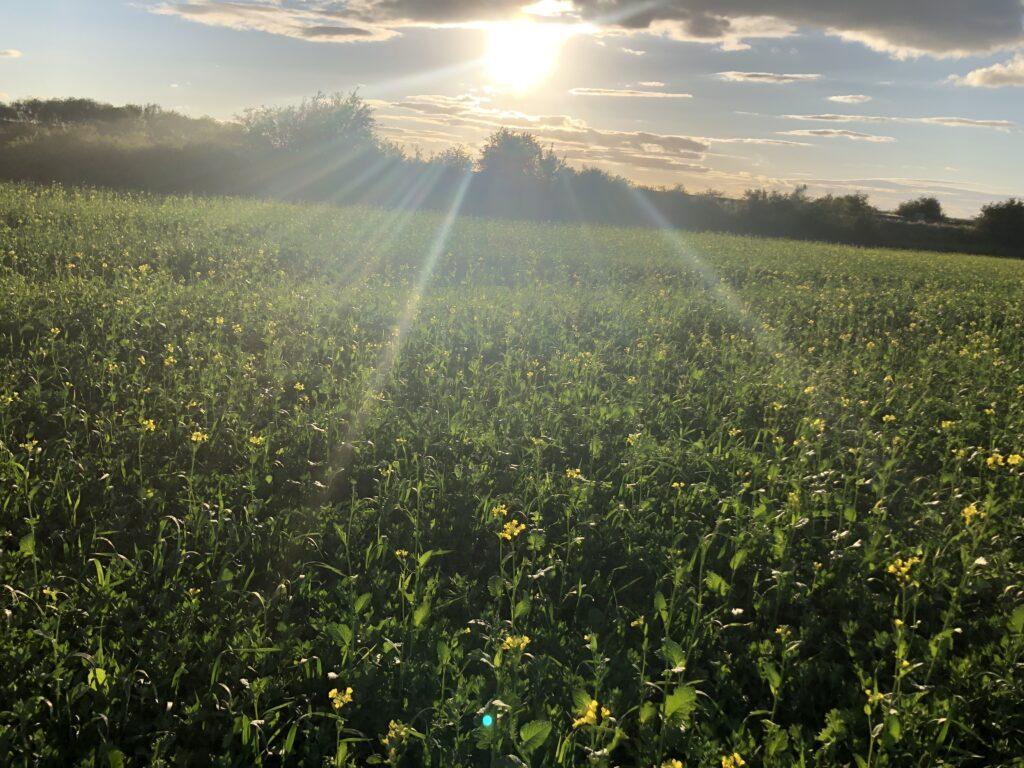 Sunset, Countryside, Walking, Summer, 366