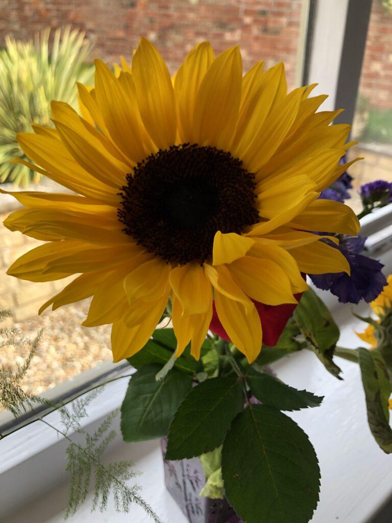 Sunflower, Flowers, Vase, 366
