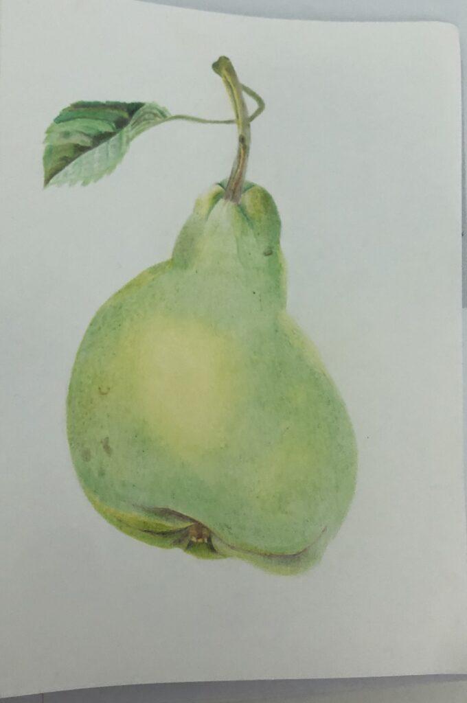 Art, Drawing, GCSE art, Pear, Silent Sunday, My Sunday Photo