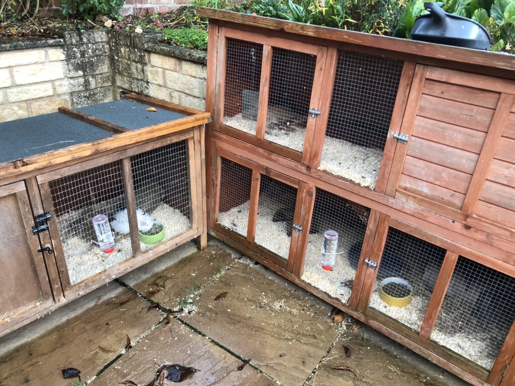 Hutches, Guinea pigs, Herbert, Henry