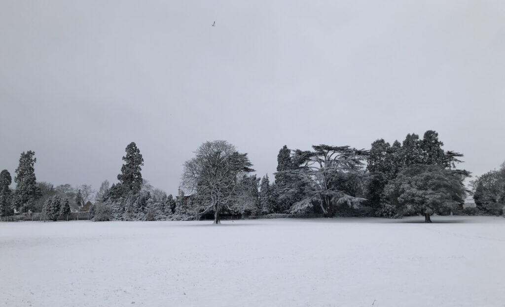 snow, trees, landscape, snow scene, Silent Sunday, My Sunday Photo
