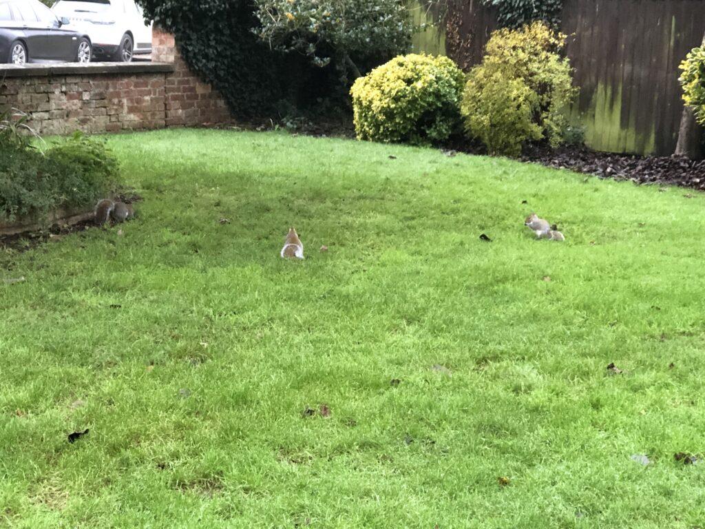 Squirrels, Garden, Squirrels in the garden