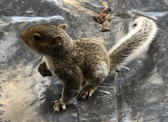 The story of the squirrels