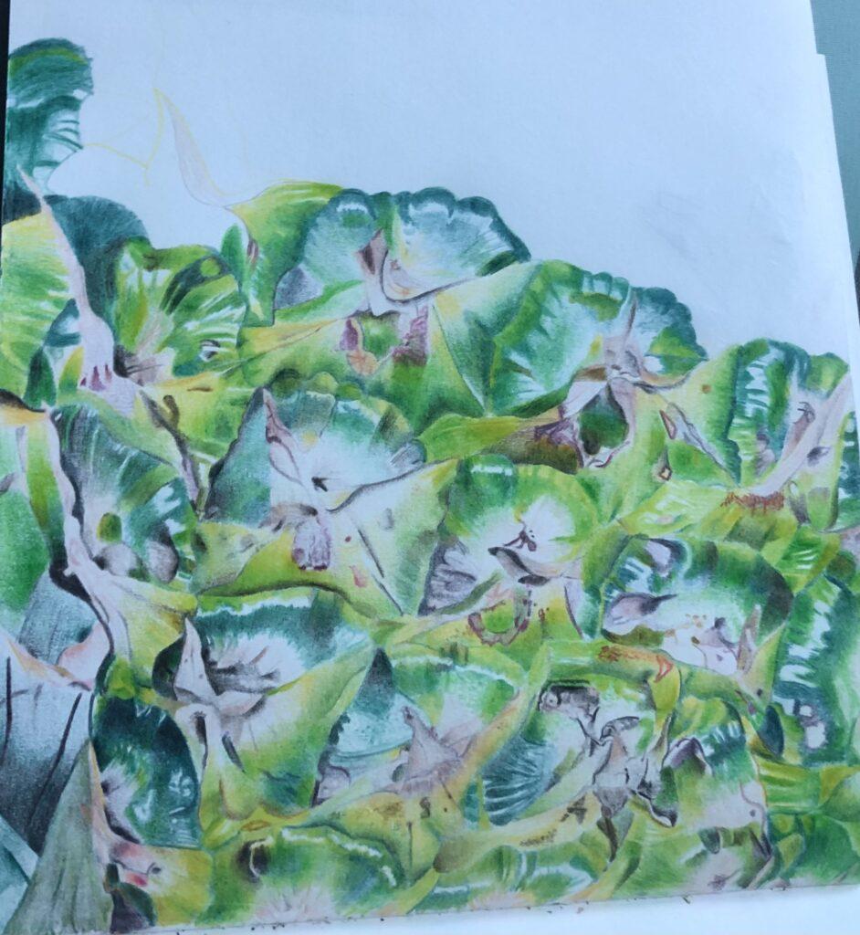 Pineapple, Drawing, GCSE art, Artwork, Year 10, Year 12